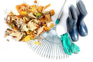 Two Good Reasons to Clean Up Your Yard this Fall